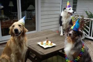 Festa di compleanno per il tuo amico a 4 zampe: cosa organizzare?